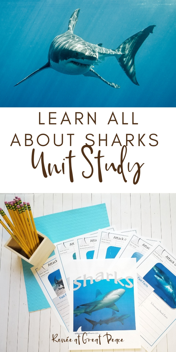 Learn All About Sharks Unit Study | Renee at Great Peace #sharks #unitstudy #sharkweek #homeschool #ihsnet