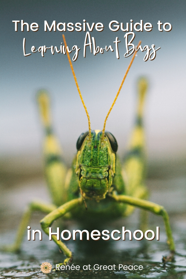 Learning About Bugs in Homeschool | Renee at Great Peace #homeschool #homeschooling #entomology #bugs #science #ihsnet