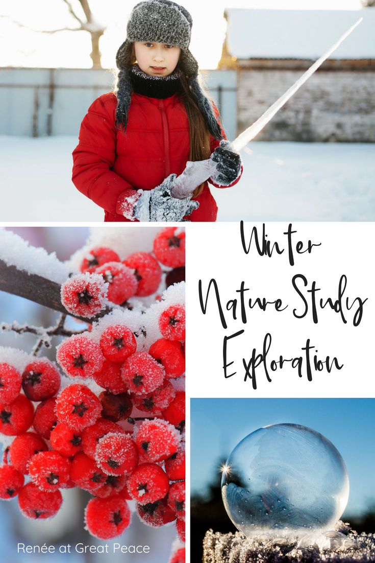 Don't Let the Cold Keep you from Winter a Nature Study Exploration  Renée at Great Peace  #homeschool #science #naturestudy #ihsnet