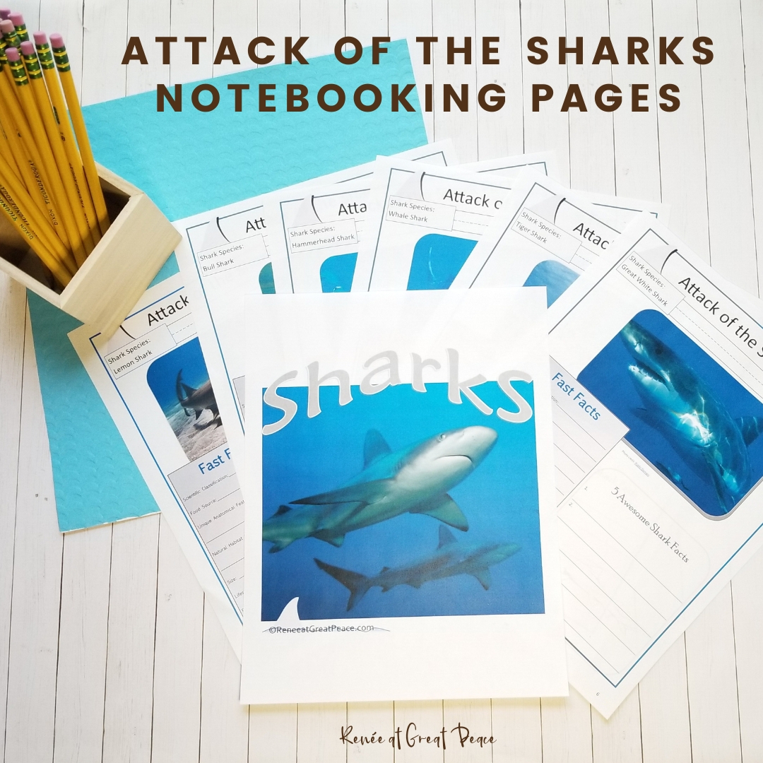 Learn All About Sharks with these Printable Pages| Renee at Great Peace #sharks #unitstudy #sharkweek #homeschool #ihsnet